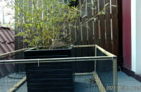 Małe kaczuszki zaczynają kluć się