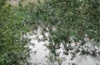 Rechot żab na zbiorniku wodnym