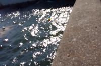Brudne Morze przy Akwarium Gdyńskim