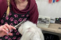 Duże szkolenie groomerskie w GSG