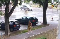 Obfite opady deszczu w Gdańsku