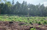 Wycinka lasu w okolicach Otomina