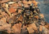 Wystawa pająków w Alfa Centrum