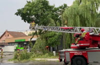Drzewo uszkodziło linię energetyczną na Witominie