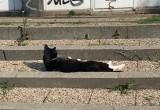 Zrelaksowany kot na Heweliusza