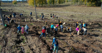 Ekipa Torusa ponownie sadzi drzewa