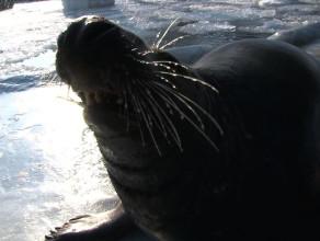 ZOO: Zimowy trening fok