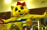 Żółta kotka skacze z kibicami