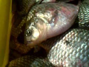 Ryby sprzedawane na hali w Gdyni