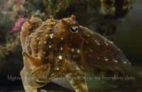 Mątwy nową atrakcją Akwarium w Gdyni