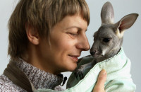 ZOO: Kangurza mama