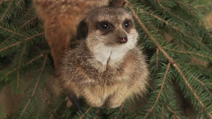 Zwierzęta przemówiły redakcyjnym głosem, czyli pracownicy trojmiasto.pl użyczają swoich głosów podopiecznym gdańskiego ZOO.