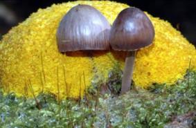 Mikrokosmos w trójmiejskich lasach
