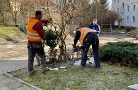 Mieszkańcy wolą drzewa od miejsc parkingowych