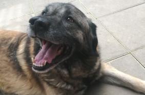 Pies Puszek szuka domu