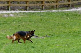 Psy bez smyczy. Ignorowany problem
