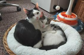 Dwa kocięta szukają domu