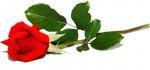 Kwiaciarnia Baccara L.Eichert