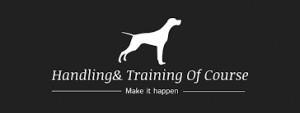 Handling&Training Of Course - Szkolenia psów