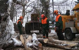 Ruszyła wycinka 20 tys. drzew na trasie Kolei Metropolitalnej