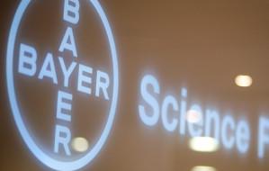 Księgowi Bayera już pracują