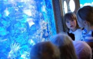 Akwarium Gdyńskie szuka sposobu na rozwój