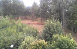 Wycinka drzew niepokoi mieszkańców Oksywia