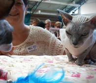 Prawie 270 kotów na wystawie w Sopocie
