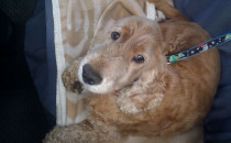 Kto porzucił psa przy rafinerii?