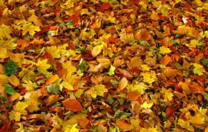 Jesienna zbiórka liści w Gdańsku