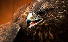 Ratują i leczą dzikie ptaki z Trójmiasta