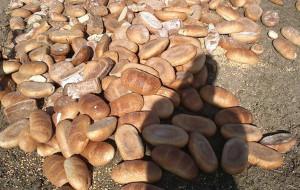 Sterta 150 kg chleba wysypana w trójmiejskim lesie