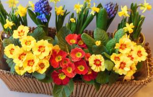 Wiosna na balkonie. Jakie kwiaty wybrać?