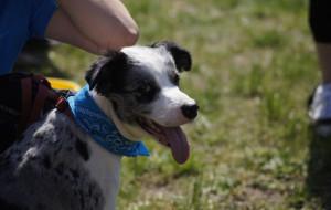 Gdynia: 1,3 mln zł na walkę z psimi odchodami