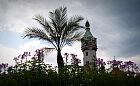 Palmy ozdobiły Plac Zdrojowy w Sopocie