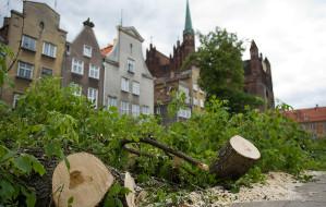 W centrum Gdańska wycięto szpaler drzew. Zamiast nich powstanie kamienica?