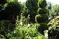 Ogrodowe iglaki. Jak nawozić i przycinać?