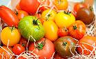 Podbiły podniebienia trójmiejskich smakoszy - pomidory premium