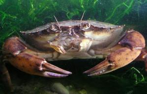 Czy Trójmiasto potrzebuje podwodnego rezerwatu?