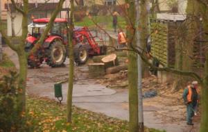 Dlaczego na Morenie znowu wycinają drzewa?