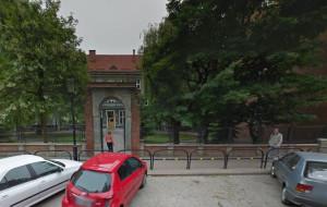 Będzie wycinka wierzb w centrum Gdańska?