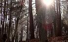 Spacer po leśnych zakamarkach Sopotu
