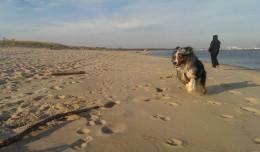 W Gdańsku można wejść na plażę z psem niemal wszędzie poza kąpieliskami