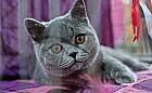 Koty rasowe prezentowały się w Sopocie