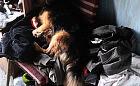 Porzucone psy na działkach na Olszynce