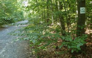 Szlak rowerowy dla amatorów kolarstwa górskiego w Kadyńskich Lasach