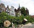 Nowe przepisy dotyczące wycinki drzew