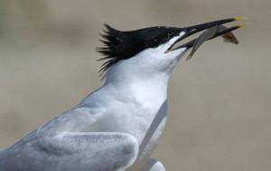 Będą ratować lęgowisko ptaków na Mewiej Łasze