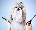 Psy deluxe, czyli jak żyć z prawdziwym rasowcem