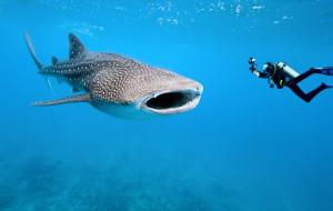 Pasja i adrenalina, czyli nurkowanie w raju
